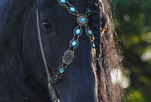Tack / For horses and horse lovers