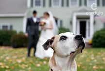 Pets at Weddings / Pets involved in Weddings