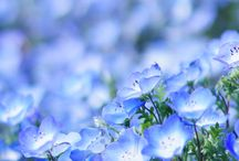 花flowers