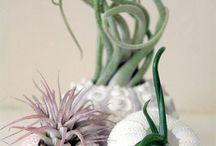 How does your (indoor) garden grow? / by The Blossom Shop
