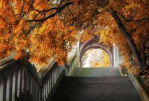 Images of fall