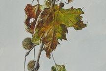 Linas Taste - Best Artist ~ Watercolor