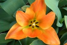 Flowers / by Benita Sapp-Atkins