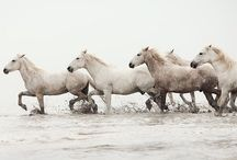 Horses / by Kathy Mackay