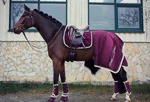 2 equipement chevaux
