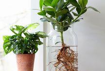 planten op water