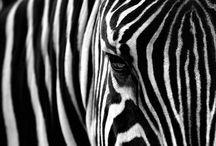 Afrika Animals
