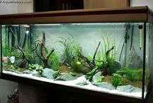 modèle aquarium 1