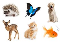 Animals / Aren't animals just the best things in life?