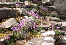 Rock Gardens / Ideas to revamp my rock garden
