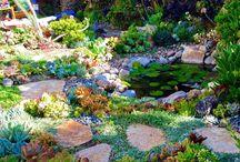 jazierkove zahrady a sukulenty