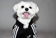 Cute Dog Stuff