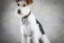 Mascotas en Ñ Fotógrafos / Mascotas, perros,