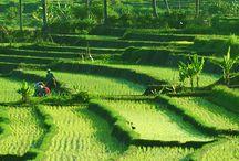 インドネシア・バリ