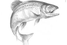 Trout Fishing Fly Line Drawing