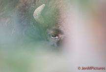My foto's on #Flickr / Foto's die geplaatst worden op Flickr komt hier een enkele van te staan om te melden als er weer nieuwe zijn geplaatst van o.a #dieren, #bloemen, #Drenthe, #Coevorden, #oldtimers, #vrachtwagens enz enz...... Click on the link under the picture too see more pictures.
