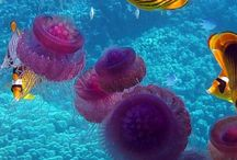 more / uzasny podmorsky svet ,ktery brzy uz nebude