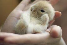 Little bunnys