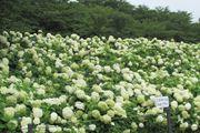 Summer Festivals in Saitama