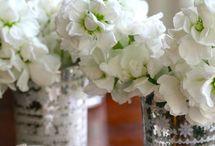 Floral Abundance / by eab designs ~ julie .