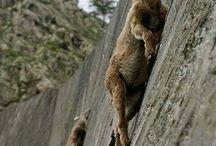 equilibrio, salti e determinazione