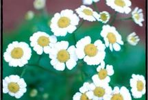 Medisenal Herbs