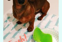 Doxie Mom Lifestyle / Time-saving​ tips, so you can spend more time with your doxie!
