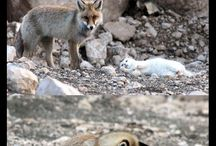 Amazing Animal Stories / For the great pet and animal stories that inspire us :)