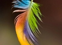 pluma de colibrí