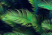 roślinność obrazy