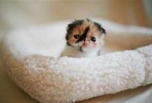 Cute Animals / by Jennifer Heidt