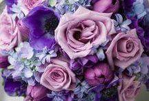 Flowers for Kristin