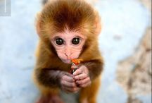 cute animals  / by Leila Wilson Coleman