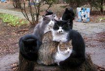 Cats (kotiki) / funny cats