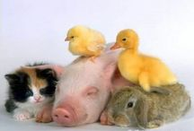 ♥we love animals ♥   / This is an animal group board ,you can invite people if you want to ,  only animals pins , no spam and  no animals cruelty , thanks xxxx  / by ♥ We love animals♥