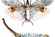 Oh Eddie Dragonflies