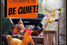 Everything About Chicken / Here you can find everything about Chicken Breeds, Chicken Treats, Chicken Keeping, DIY Chicken Tips, Chicken Health and Care