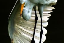 Birder in Me