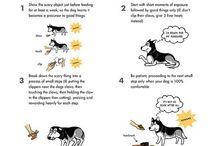 Dogs: Training