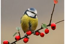 Birds / Here you can see the wonderful birds that grace our gardens  at Pen Y Garn Cottage.