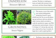 garden medicinal plants