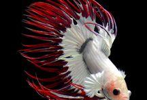 Wishing for... An aquarium