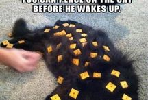 Παιχνίδια για τη γατα μου