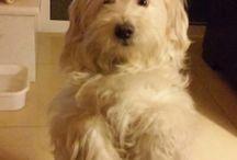bugiu.  Best of friends / Dogs dog petit