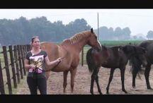 paardengedrag