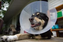 Hacks from the ER for your sick/recovering pet / Ideas to make recovery easier for your pet.