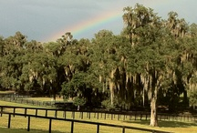 Farms / Learn more about the remarkable places that raise Thoroughbreds destined for horse racing greatness.