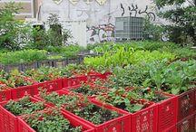 porta piante