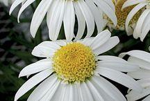 alaska flowers and flower beds