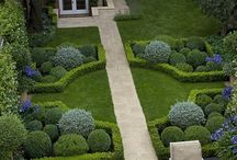 landscaping with buxus
